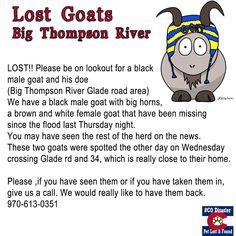 Lost Goats Big Thompson River #COLORADO #Floods