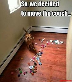 So We Decided To Move The Couch cute memes animals cat cats adorable animal kittens pets kitten funny pictures funny animals funny cats Funny Animal Memes, Cute Funny Animals, Funny Cute, Cute Cats, Funny Dogs, Funny Humor, 9gag Funny, Animal Quotes, Funny Cat Quotes