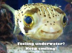 Feeling underwater? Keep smiling! http://on.webmd.com/MZ2dCU #webmdsweeps
