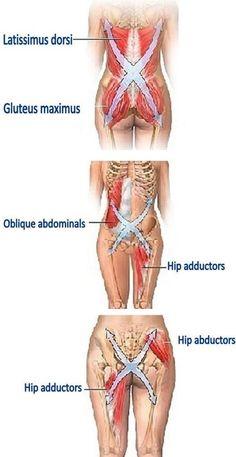 """""""El Corazón"""" es la región más central del cuerpo, esencialmente es todo que directamente adjunta a las caderas, que incluyen: los huesos de la pelvis, la espina, la caja torácica y el fémur (el muslo) y todos los músculos que impulsan aquellas regiones. El corazón es el foco de todo el poder físico en el cuerpo, esto se relaciona con nuestra postura y afecta nuestra capacidad de colocar el cuerpo y realizar la acción. El desarrollo bueno Principal causará la fuerza mayor potencial y la"""