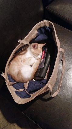 さあ出掛けようと思ったら 鞄の中で猫が寝ていた
