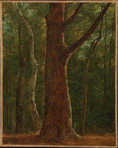 Achille-Etna Michallon (français, 1786-1822), Beech Tree, vers 1817, huile sur toile, 36.2 x 28.9 cm, Metropolitain Museum of Art, NY