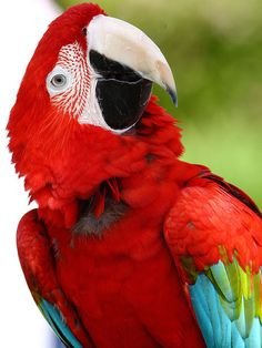 Parrot Portrait from Seaport Village in San Diego.- Christmas Parrot - Flickr - Photo Sharing!