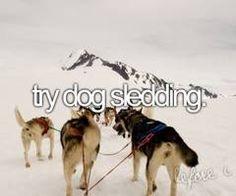 try dog sledding #RogersWinterWhites