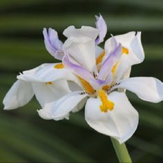 Wild lily by Karen