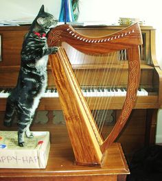 Harp Cat - wonder if I could teach my cats to play... #music #cat #harp
