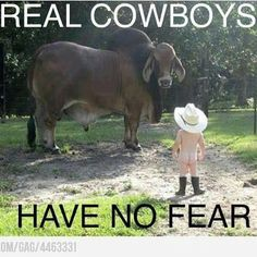 Refreshing Home, Cowboy, Bulls, Fear
