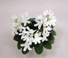 Lunar Lily white колл. Морозова Е.