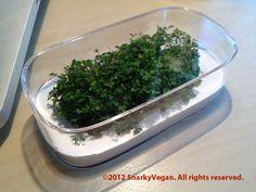 terrarium made from magic mouse packaging- Apple-mouse-terrarium