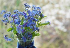 不要忘了我, 花, 草地, 野花, 开花, 盛开, 性质, 牧歌, 指出花, 厂, 蓝色, 春天, 关闭