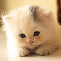 **Tiny puff.