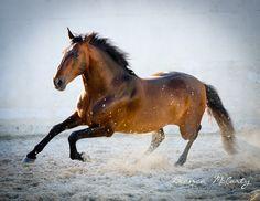 Coudelaria Vila Viçosa, Portugal, Lusitanos, Stallions, Equine Photography, Bianca McCarty Photography