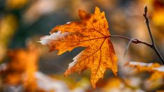 Autumn leaves in amber brown / Bokeh Leaf Photography, Autumn Photography, Autumn Day, Autumn Leaves, Happy Autumn, Winter, Autumn Scenes, Lovely Smile, Seasons Of The Year