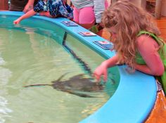 10 Fun Things To Do in Daytona Beach with Kids: Pet a Stingray | About.com Family Vacations