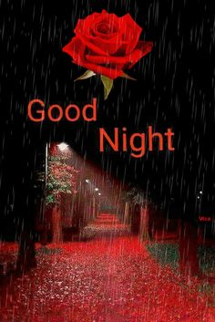 Good Night Qoutes, Good Night Thoughts, Good Night Prayer, Good Night Blessings, Good Night Gif, Good Night Sweet Dreams, Morning Blessings, Night Time, Good Morning Sunday Images