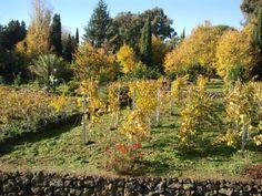 Le piante e i colori dell'autunno nell'azienda Trinità