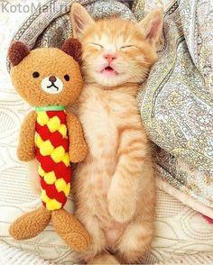 Спи, моя радость усни... | KotoMail.ru