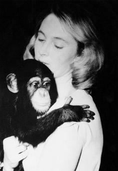 Jane Goodall Arrives At Gombe National Park In Tanzania To Begin Studying Chimpanzees In The Wild on July 14 1960 Chimpanzee, Orangutan, Wildlife Biologist, Jane Goodall, Mundo Animal, Primates, Ladies Day, Beautiful Creatures, Portraits
