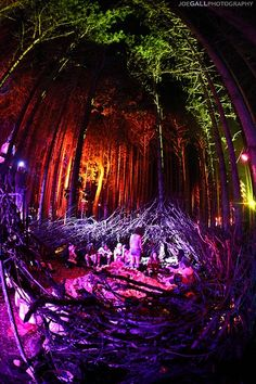 Electric Forest - My home away from home <3
