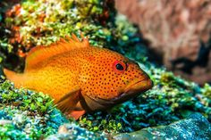 Learn about identifying fish and find out more about the biodiversity of marine habitats with the PADI AWARE Fish ID Specialty Course! See more species and more of your dives with #scubalifecozumel #padi #scuba #dive #cozumel #mexico #vacation #reef #fishid #projectaware