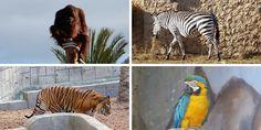 Nuestra experiencia con niños en el zoo de Elche #Alicante #parques #ociofamiliar