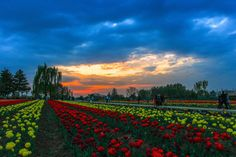 500px / Photo RADIANT SKY by Deen Mohammad