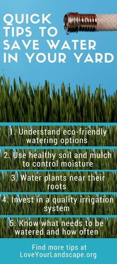Quick tips to save water in your yard