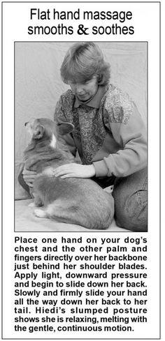 Doggy Back Massages   Whole Dog Journal