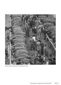 Bild aus: Heiri Scherer (Hrsg.), Muni. Der Zuger Stierenmarkt. (NZZ Libro, Sept. 2016)