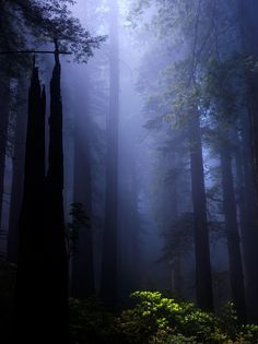 Magical forest light