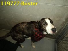URGENT Dogs need resQ/adoption - RCHS - Beckley, WV****CLICK ON FACEBOOK LINK FOR COMPLETE ALBUM
