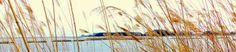 SingleMalt-CapeBreton-NorvellHimself: Horizon