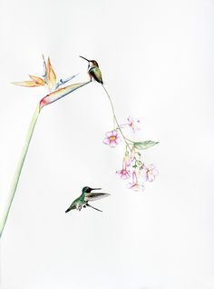 Amy Ross, 'Bird Of Paradise 6,' 2015, Kopeikin Gallery