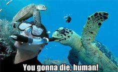 Turtles: Murderers of the Sea.