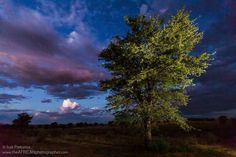 ❀ Landscape, Kgalagadi Transfrontier Park in South Africa ❀