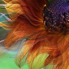...Autumn sunflower...
