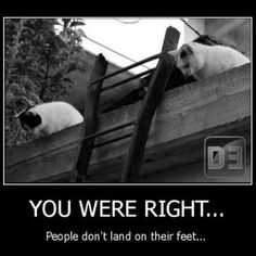You were right... people don't land on their feet!  #cats #humor #animals