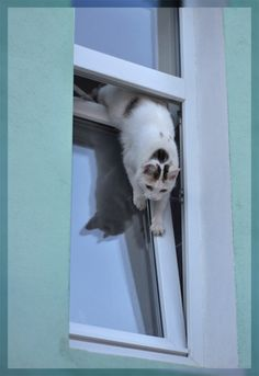 Tilting Windows are death traps for cats. I Love Cats, Cute Cats, Funny Cats, Animals And Pets, Cute Animals, Cats Tumblr, Cat Window, Cat Whisperer, F2 Savannah Cat