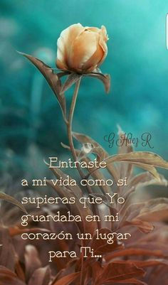 .. Amor Quotes, Love Quotes, Inspirational Quotes, Sad Love, Cute Love, Frases Love, Quotes En Espanol, God Prayer, Spanish Quotes
