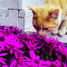 Take the time each day to smell the flowers.