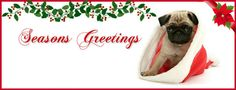 Pug Holiday Themed Facebook Cover Photos For Your Timeline. Pug Seasons Greetings Facebook Cover Photo