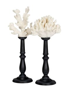 white coral on black stands