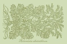 Artemisia absinthium sticker for herb & garden - loving folks!