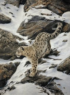 A gallery of fine art oil ,watercolour paintings of wildlife,birds & portrait works . Huge range of Greeting cards in several sizes of the natural world . Devon Uk, Snow Leopard, Wildlife Art, Natural World, Art Oil, Watercolor Paintings, Art Photography, Fine Art, Portrait