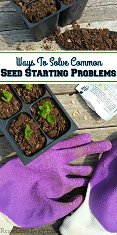 Ways To Solve Common Seed Starting Problems &; Reuse Grow Enjoy Ways To Solve Common Seed Starting Problems &;