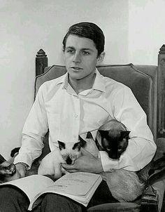 Burt Ward 猫 cat แมว シャム猫 Siamese วิเชียรมาศ Siamese Cats, Cats And Kittens, Ragdoll Kittens, Pet Cats, Tabby Cats, Funny Kittens, Bengal Cats, White Kittens, Adorable Kittens