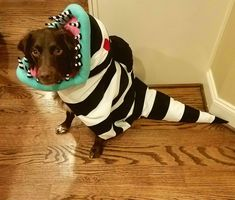 Our little guy was a sandworm to go with our 'Beetlejuice' theme this year : aww
