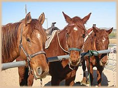 Our horses at Stagecoach Trails Guest Ranch http://www.ranchseeker.com/index.cfm/pg/listing_details/id/11917/frompopup/0