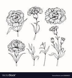 Most Popular ideas white carnation flower tattoo Carnation Drawing, Carnation Flower Tattoo, Birth Flower Tattoos, Small Flower Tattoos, Flower Tattoo Designs, Small Tattoos, Black And White Flower Tattoo, Black Tattoos, Body Art Tattoos