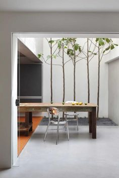 Five trees provide a striking vertical element, as well as a bit of greenery, in the kitchen of São Paulo architect Guilherme Torres. Upstairs, the tops of the trees create a lush view out of the bedroom window.